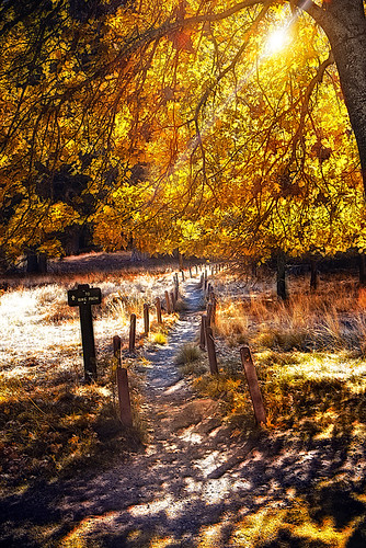 park autumn fall yellow forest landscape national yosemite