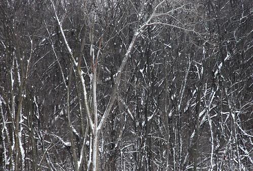 trees winter ohio snow forest tubing avalanche madrivermountain zanesfield