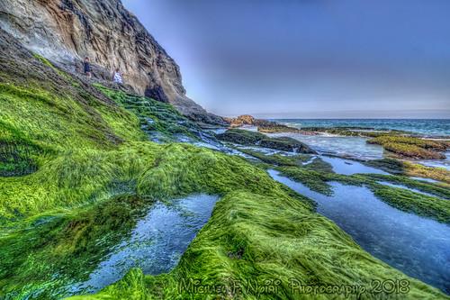 lagunabeach 1000stepsbeach algae pacificocean sea rockyshore