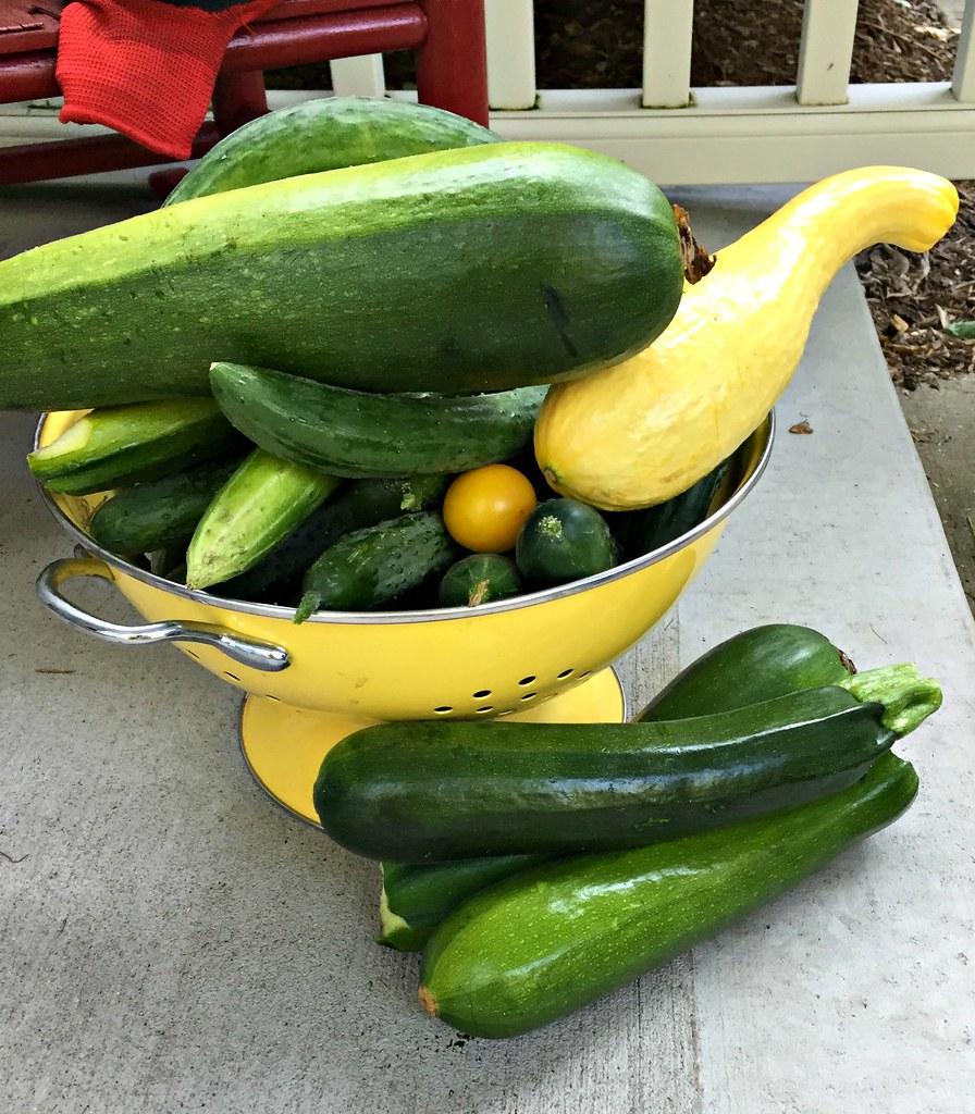 lots of zucchini