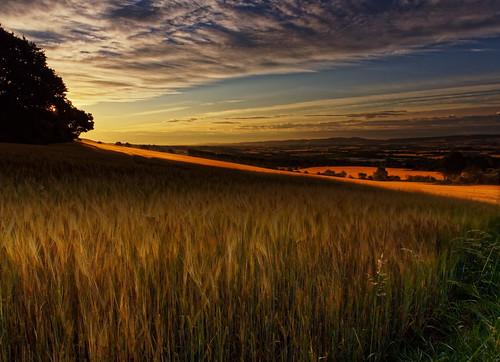barley field landscape perthshire scotland sky sunrise