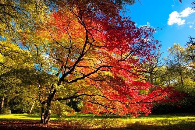 Autumn_Tree-02-c