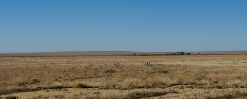 sky horizon grass dirt plains greatplains trees