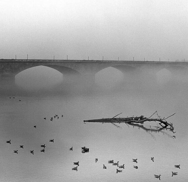 Potomac Fog