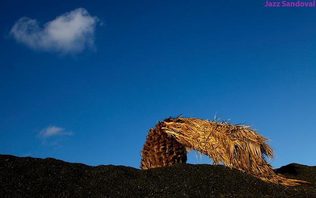 Muerta. Lanzarote, noviembre 2012.