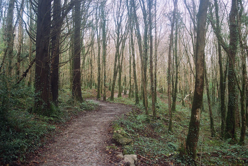 Curragh Chase bike trails | by Heygalicious