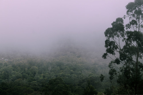 india travel dark clouds western ghats kerala world challenge view mountain rock young indian pink tree