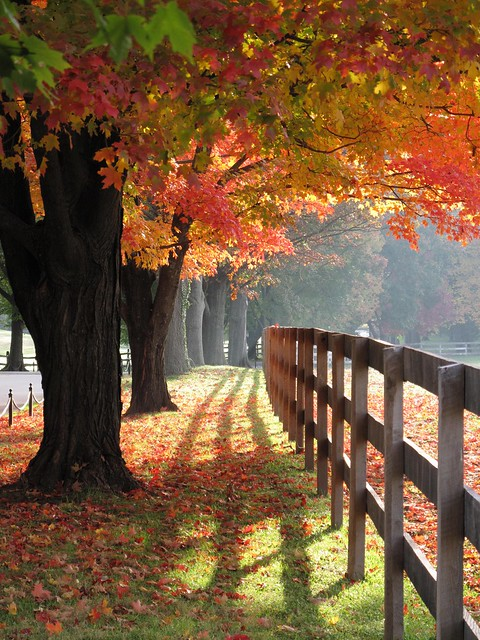 Garrison Forest ~ magical maples