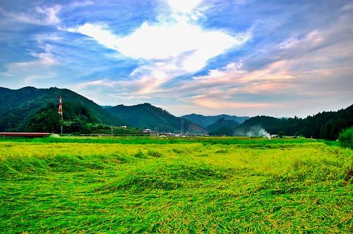 japan ricefield 岐阜 gifu hdr 田園 郡上八幡 gujohachiman 郡上市