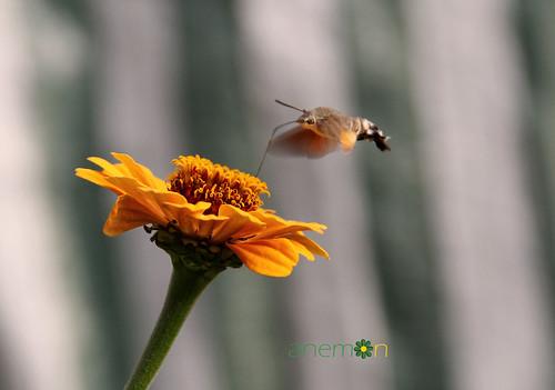 flower bee çiçek arı