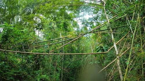 island jamaica caribbean wiltshire mayfieldfalls saintjamesparish