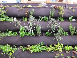 Vertical gardening | by Ruth and Dave