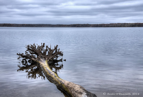 sky lake tree water clouds roots reservoir treeroots manasquan blueribbonwinner manasquanreservoir scottnj