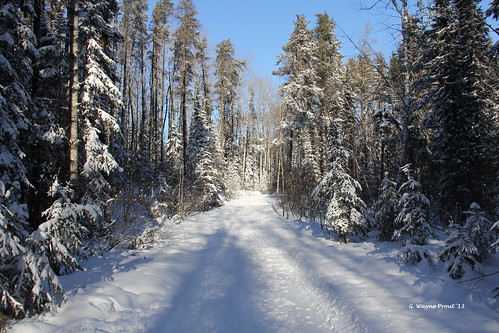 winter northroad herseylakeconservationarea timminsontariocanada