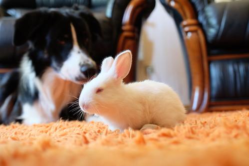 Beware of the bunny