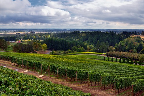 americanviticulturalarea archerysummitwinery blueskieswithclouds capturenx2edited colorefexpro countryside day2 hillsideoftrees hillsides lookingse nature nikond800e post project365 rowsofvineyards trees triptomountrainierandcolumbiarivergorge vineyards willamettevalley willamettevalleyava or unitedstates