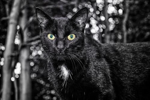 Black Cat (10/09/2016)