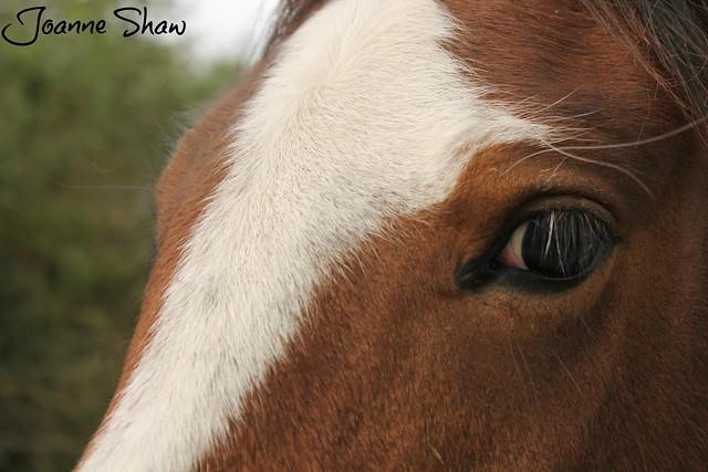 IMG_4075 Horses Eye N