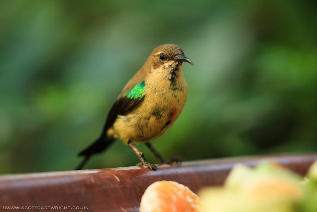 Humming Bird Perching