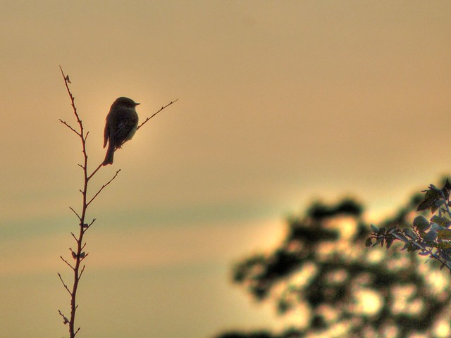 Evening Watch