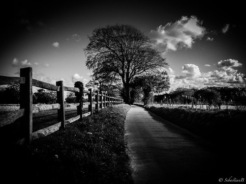 road tree monochrome mobile landscape cycling country riding 4s iphone blackwhitephotos iphoneography