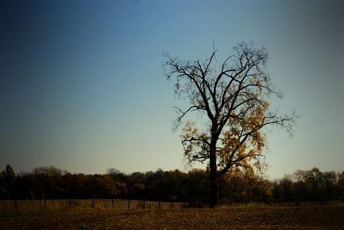 autumn trees ohio tree fall nature leaves rural october sony alpha foilage 2012 a230 fairfieldcounty ruralohio ohiofoothills