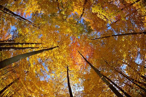 ohio woods fallcolors fallfoliage fisheyelens changingleaves autumnscenes autumn2012