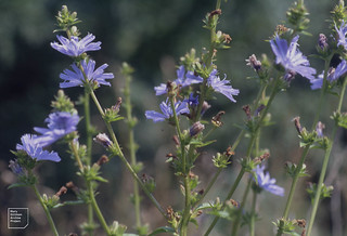 Chickory. M4 reserve 28/07/91 and docks 2001 | by Mary Gillham Archive Project