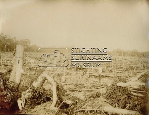 Schoongemaakt perceel   by Stichting Surinaams Museum