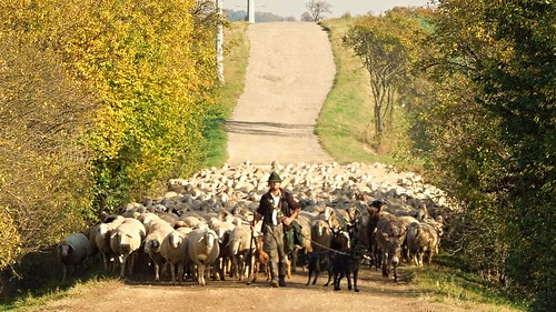 Shepherd and his flock | by Tobi NDH