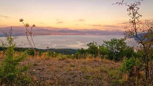 Prespa Lake In The Late Sun And Overblown Thistles