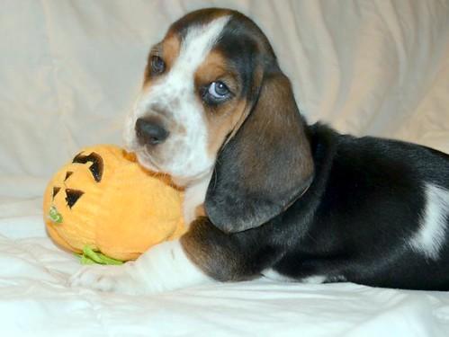 pupboy 6 weeks 100912