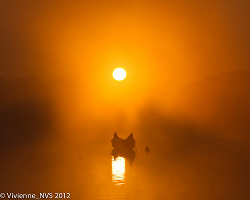 sea sun mist lake fog sunrise illinois canoe preserves lakecounty independencegrove foggyscenes ofgold lcfpd