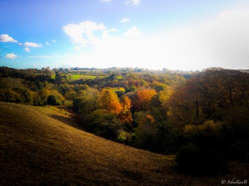 autumn trees sky landscape iphone4s