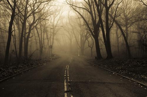 road street newyorkcity trees mist fall fog foggy queens gothamist forestpark