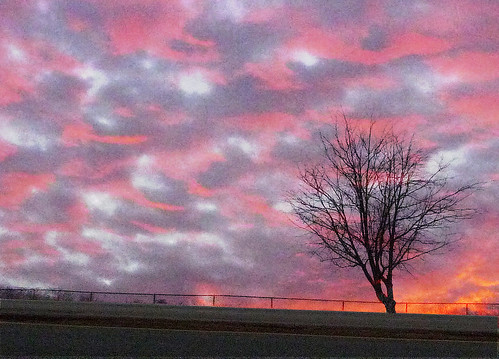 morning pink autumn red sky lake color tree nature silhouette clouds sunrise landscape dawn virginia ridge woodbridge