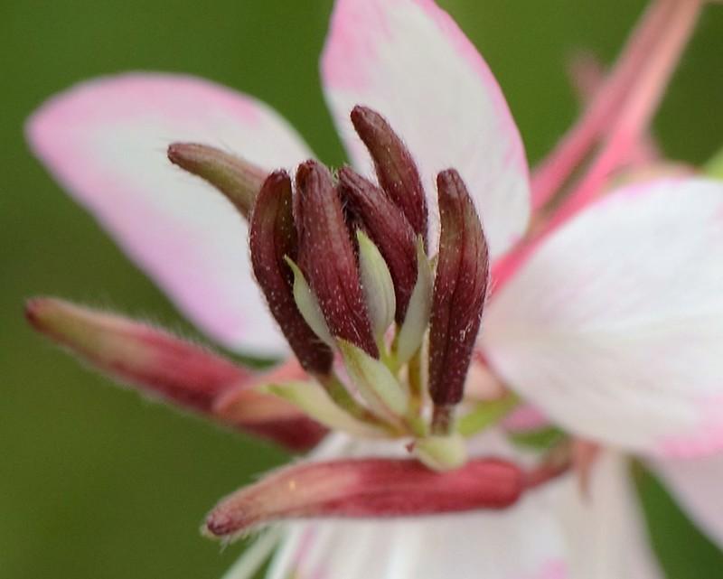 Wild Flowers 28.09 (15)
