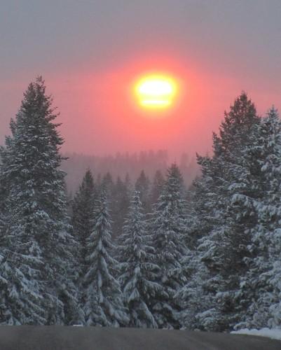 november autumn trees sunset snow canon washington northwest pines marilynhassler omadarlingphotography