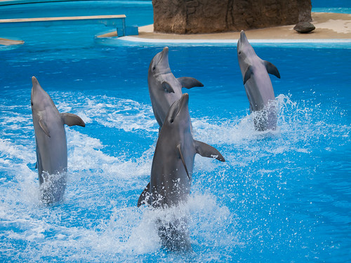 Dolphins | by wwarby