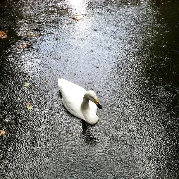 It's rainy today. ☔☔☔