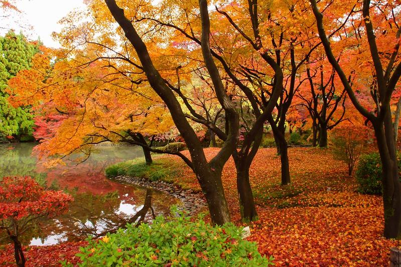 京都府立植物園の秋