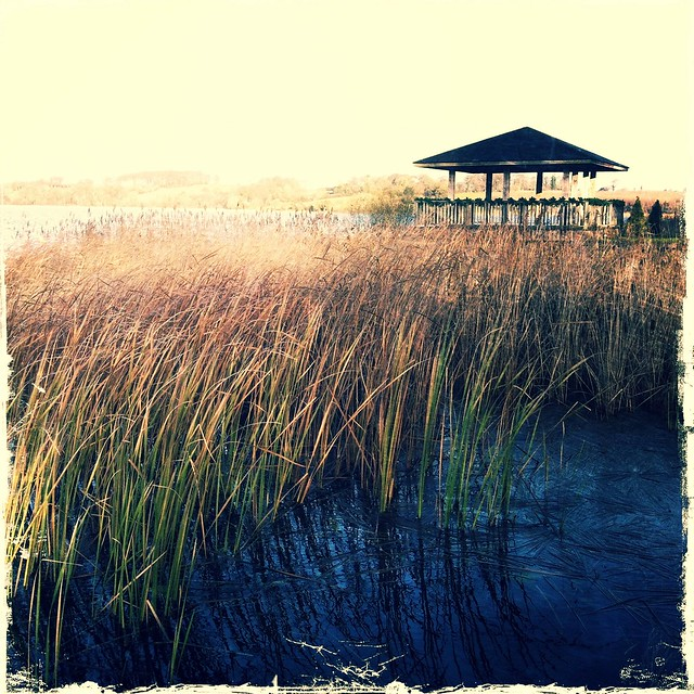 Beyond the Reeds