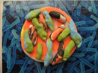 Bacteria in a petri dish