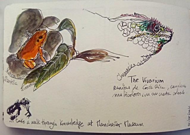 #uskmanchester2016. The vivarium in Manchester Museum. 01/08/16