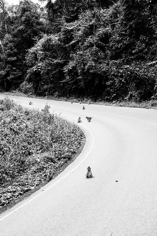 THAI2016_-352