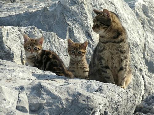 cat kat chat moda istanbul gato katze gatto kedi katt kissa kadıköy