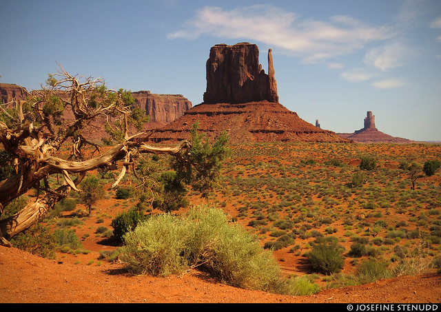 20160824_04 Little tree & buttes in Monument Valley, Arizona