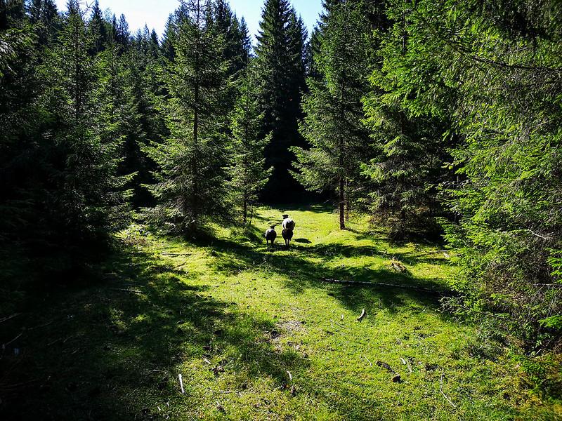 06-Sauer ved Overskylda