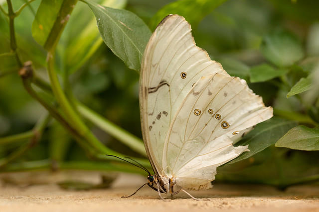Butterfly Palace 7880