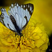 Life is like a butterfly, You can chase it, or you can let it come to you. by fareeharauf